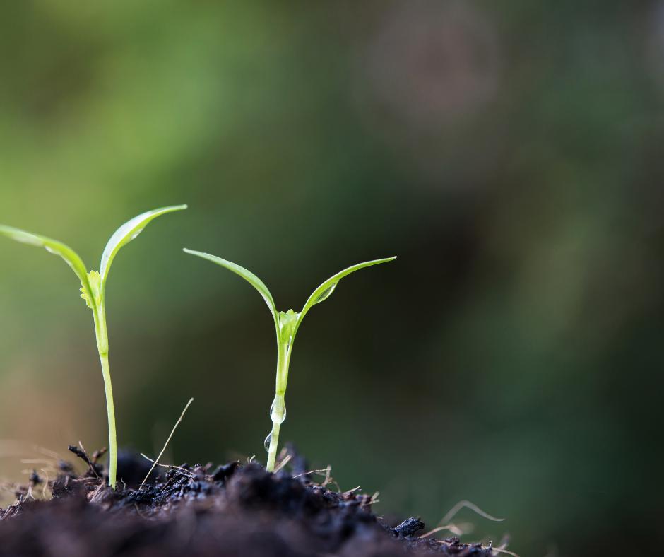 Basisvaardigheden coaching: hoe laat ik mijn medewerkers (en mezelf) nu écht groeien?